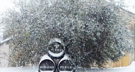 Neige sur le Domaine Puech